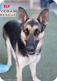 German Shepherd Dog Dog for adoption in Las Vegas, Nevada - Elf