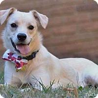 Adopt A Pet :: Daisy - Harrisville, RI