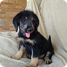 Adopt A Pet :: Crystal-pending adoption