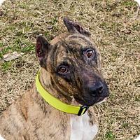 Adopt A Pet :: Titus - Dayton, OH