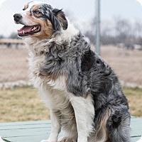 Adopt A Pet :: Ziva - Mechanicsburg, OH
