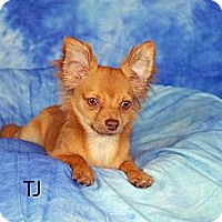 Adopt A Pet :: TJ - Ft. Myers, FL