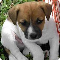 Adopt A Pet :: MARBLES - Phoenix, AZ