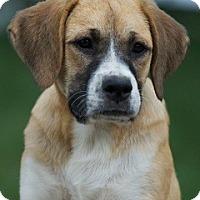 Adopt A Pet :: Roxanne - Providence, RI