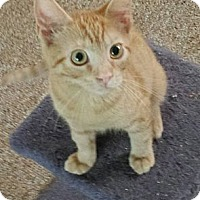 Adopt A Pet :: Barney - brewerton, NY
