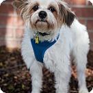 Adopt A Pet :: Preston