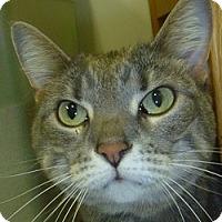 Adopt A Pet :: Daisy - Hamburg, NY