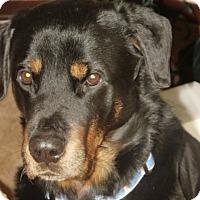 Adopt A Pet :: Duggan - Caledon, ON