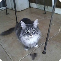 Adopt A Pet :: Mia - Alamo, CA