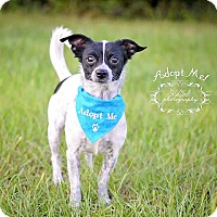 Adopt A Pet :: Ridge - Fort Valley, GA