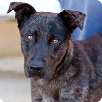 Adopt A Pet :: Haggard - Boston, MA