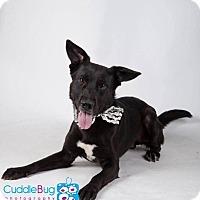 Adopt A Pet :: Rocky - Rexford, NY
