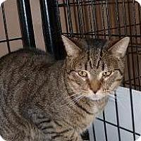 Adopt A Pet :: Grant - Massapequa, NY