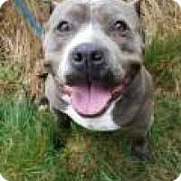 Adopt A Pet :: REYNOLDS - Super affectionate loving girl - Bainbridge Island, WA