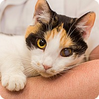 Adopt A Pet :: Lucie - Germantown, MD