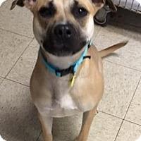 Adopt A Pet :: Apache - Cleveland, OH
