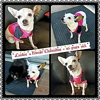 Adopt A Pet :: Cookie - Fullerton, CA