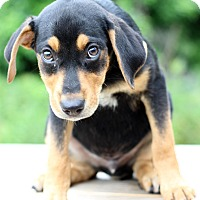Adopt A Pet :: Gabe - Waldorf, MD