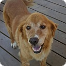 Adopt A Pet :: Cleo - ADOPTION PENDING - CONGRATS HAMMONDS