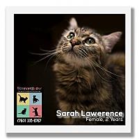 Adopt A Pet :: Sarah Lawerence - Palm Desert, CA