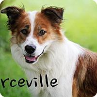 Adopt A Pet :: Perceville - Joliet, IL
