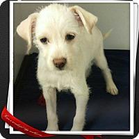 Adopt A Pet :: Rex - Apache Junction, AZ