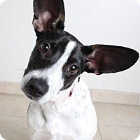 Adopt A Pet :: Missie  D161862 - Edina, MN