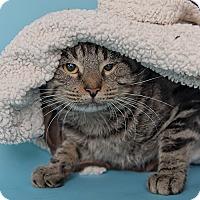 Adopt A Pet :: Miguel - Wilmington, DE