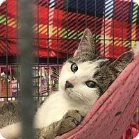 Adopt A Pet :: Dodger - Rochester, MN