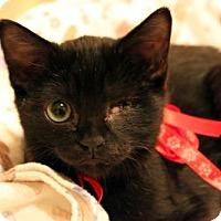Adopt A Pet :: Anne Bonny - Dallas, TX