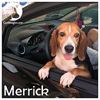 Adopt A Pet :: Merrick - Novi, MI