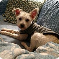 Adopt A Pet :: Ruby Lou - Frederick, MD