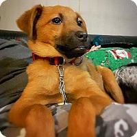 Adopt A Pet :: Reggie - Tijeras, NM