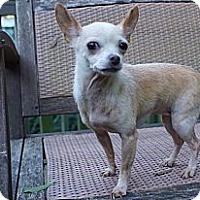Adopt A Pet :: Moxie (Courtesy List) - Richmond, VA