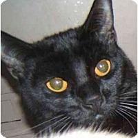 Adopt A Pet :: Hendrix - Dallas, TX