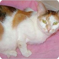 Adopt A Pet :: Maya - Etobicoke, ON