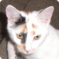 Adopt A Pet :: Cinderella - Stafford, VA