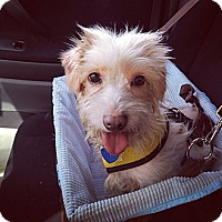 Adopt A Pet :: Odie - Orange, CA