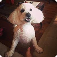 Adopt A Pet :: PASHA - East Hanover, NJ