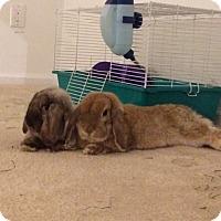 Adopt A Pet :: Stuart and Harvey - Conshohocken, PA