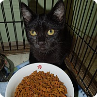 Adopt A Pet :: Ella - Medina, OH