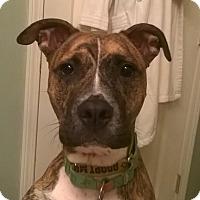 Adopt A Pet :: Luke - Winchester, VA