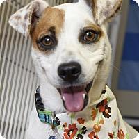 Adopt A Pet :: Coraline - Homewood, AL