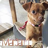 Adopt A Pet :: Margaret - San Antonio, TX