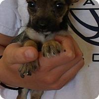 Adopt A Pet :: QUENTIN - Corona, CA