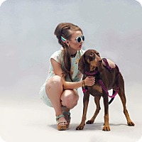 Adopt A Pet :: Lucy - Ottawa, ON