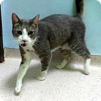 Adopt A Pet :: Yuuki - Janesville, WI