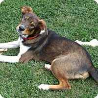 Adopt A Pet :: Sparty - ADOPTED - Livonia, MI