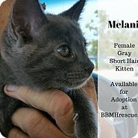 Adopt A Pet :: Melanie - Temecula, CA