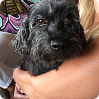 Adopt A Pet :: Kelsey - Pittsburgh, PA